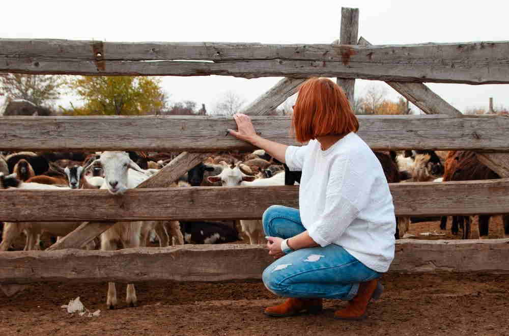 Women in a white top looking at farm animals.
