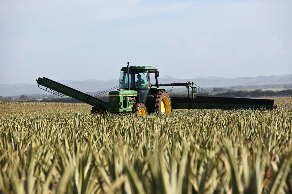 A green tractor within a field full of crops.